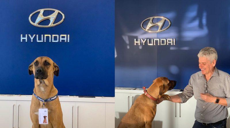 hyundai car showroom adopts stray dog
